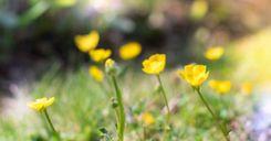 تساوي ساعات الليل والنهار اليوم بسبب الاعتدال الربيعي image