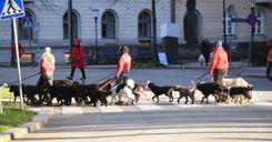 البريكست يصعّب إجراءات سفر حيوانات بريطانيا إلى الاتحاد الأوروبي image