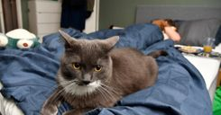امرأة مطالبة بدفع 95 ألف كرون لشركة سكن بسبب قطة image