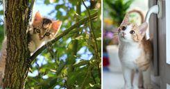 قواعد جديدة هدفها الحد من تكاثر القطط في السويد image