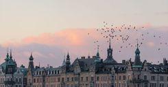 السويد بالمرتبة الخامسة عالمياً في مستوى المعيشة وجودة المناخ image