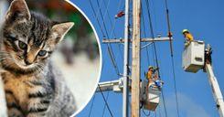 قطة تتسبب بقطع التيار الكهربائي عن مئات المساكن image