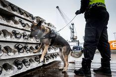 الجمارك السويدية تحبط عملية تهريب 1.2 طن من الحشيش قادمة من المغرب  image