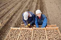 مشروع جديد سيوفر فرص عمل في الزراعة بعد نقص العمالة الخارجية image